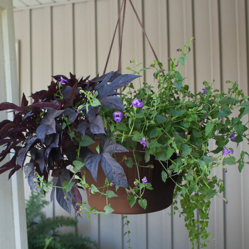 Colonnade Hanging Basket Main Image