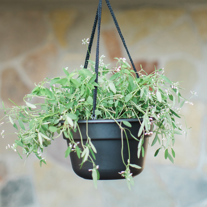 Dura Cotta Hanging Basket Main Image